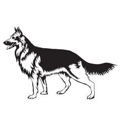 decorative german shepherd vector image