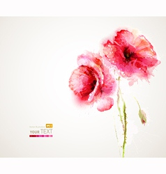 two poppies vector image vector image