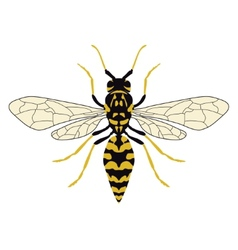 Wasp top view vector