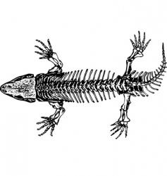 skeleton of seymouria vector image