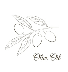 Small twig with black olives vector image