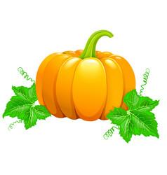 Beautiful ripe orange pumpkin vector
