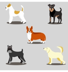 Dogs set of icons and vector