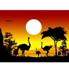 Ostrich silhouettes with landscape background vector