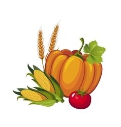 Harvest Pumpkin Stalks and Tomato vector image