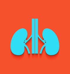 Human anatomy kidneys sign whitish icon vector