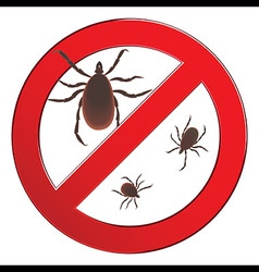 Mite spider mite red mite allergy epidemic mite vector