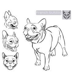 Line art French Bulldog vector image vector image