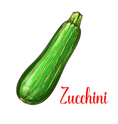 zucchini squash sketch vegetable icon vector image vector image