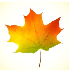 Isolated autumn bright maple leaf vector image