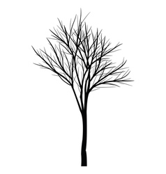 Trees with dead branches vector image