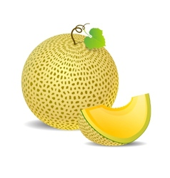 Ripe yellow melon and a piece just vector