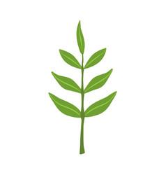 Ash tree green leaves vector