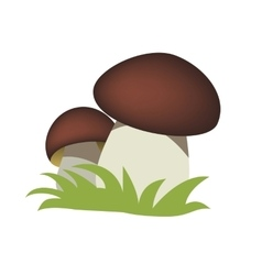 mushrooms vector image