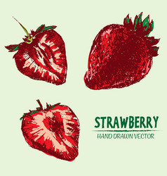 Digital detailed color strawberry vector