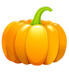 Beautiful pumpkin without leafes vector