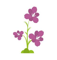 Amaryllis flower decoration beautiful vector