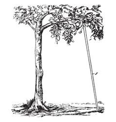 Tree prop vintage vector