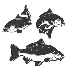Set of carp fish icons isolated on white vector