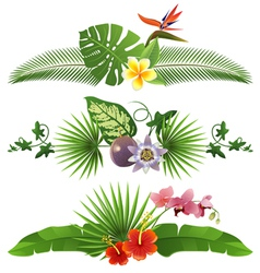 Tropical borders vector