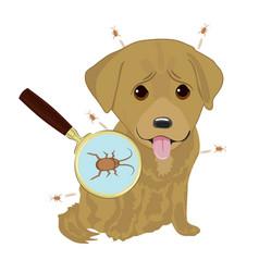 dog ticks in fur vector image