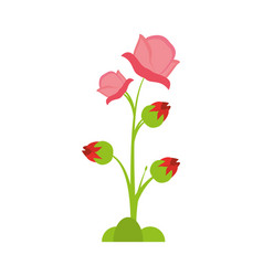 Pink rose flower spring vector