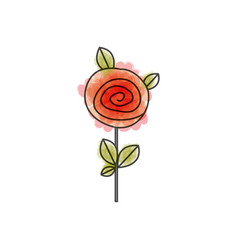 watercolor drawing of button red rose with leaves vector image