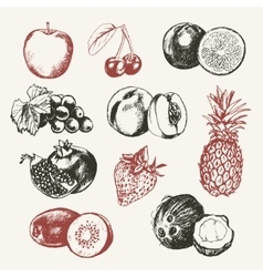 Fruits - modern hand drawn design vector