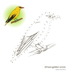 African golden oriole bird learn to draw vector