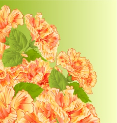 Flowering shrub yellow hibiscus floral background vector
