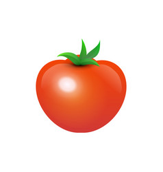tasty juicy tomato vector image