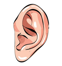 Cartoon image of human ear vector