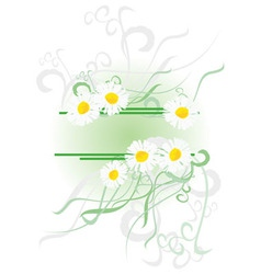 chamomiles banner vector image vector image