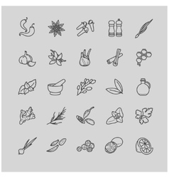 Spices and seasonings line icons vector