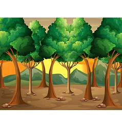 Trees at the forest vector image vector image