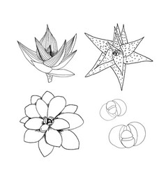 liner set of succulents hand drawn vector image vector image