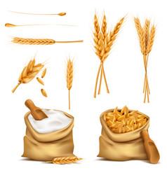 realistic set cereals 3d icon vector image