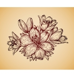 Vintage flower hand drawn retro sketch lily vector