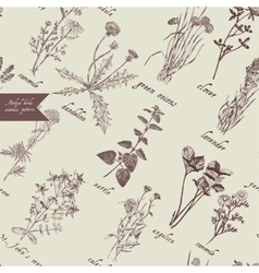 Medical herbs seamless pattern Hand drawn vector image