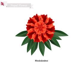 Tulip flowers the national flower of nepal vector