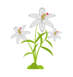 Crocus flower petal leaf vector