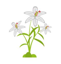 crocus flower petal leaf vector image