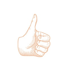 Hand Drawn Thumbs up vector image vector image