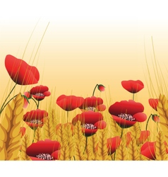 Poppy lawn with wheat vector