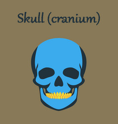 Human organ icon in flat style skull vector