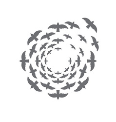 Bird circle design template vector