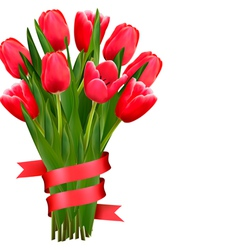 Celebration background with red tulips and ribbons vector