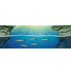 Fish swimming under the river vector image