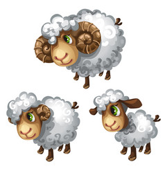 White sheep in different poses animal vector