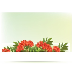 Autumn banners with rowan vector image vector image